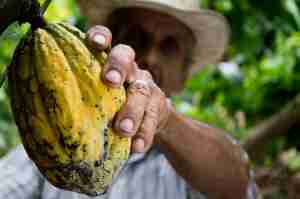 Web-conférence : L'art du cacao